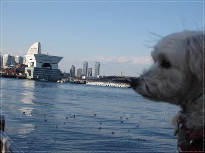 初めての横浜7