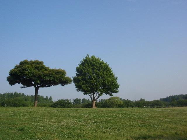今朝の気になる木