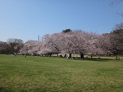 kinuta201503c.jpg