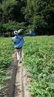 すいか畑 (4)