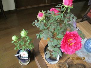 IMG_0456_convert_20150428221943.jpg