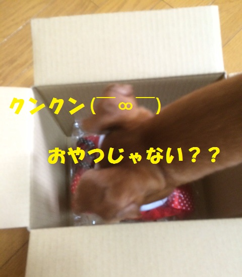 IMG_2250.jpg
