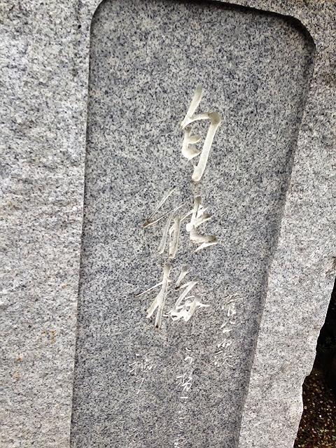長田区梅ヶ香公園の梅(^^♪ それとわんちゃんの集いの告知♪