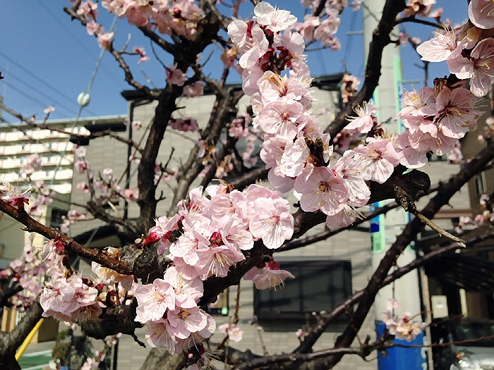 明日(3月22日)はマールとわんちゃん達の散歩会@鉄人広場ですヽ(^o^)丿
