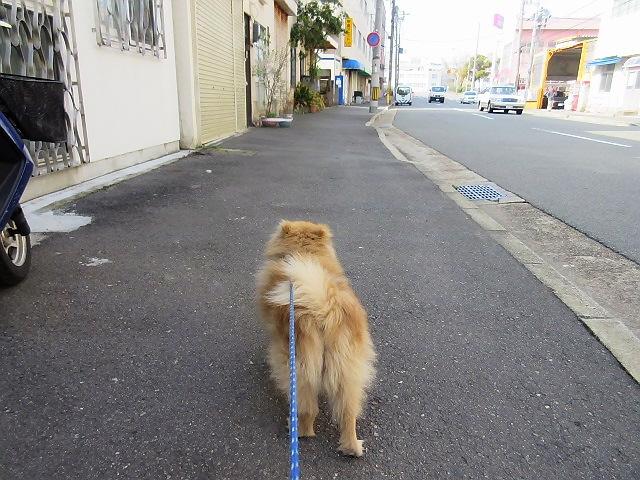 ワンズ散歩会@新長田鉄人広場→アグロ(^^♪