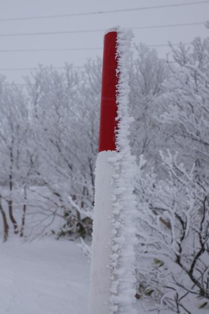 樹氷成長中