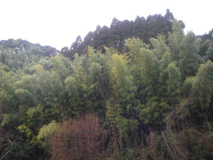 亀山の雑木林