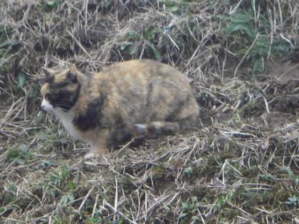 亀山湖の野良猫2