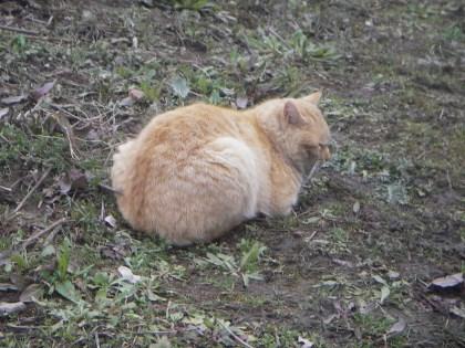 亀山湖の野良猫1