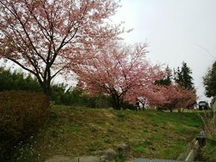 桜20150401
