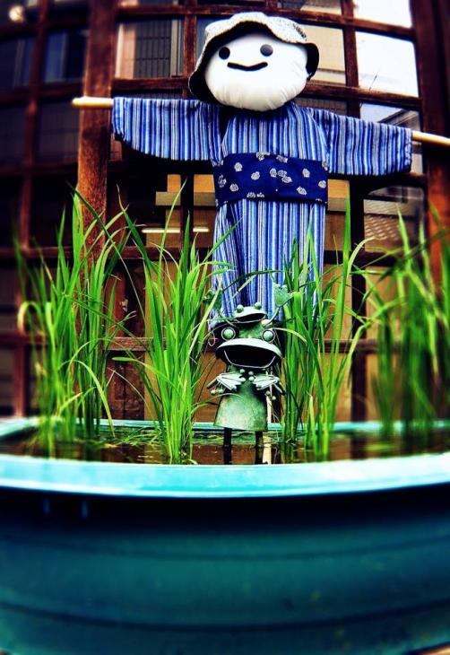 麦とろの日④