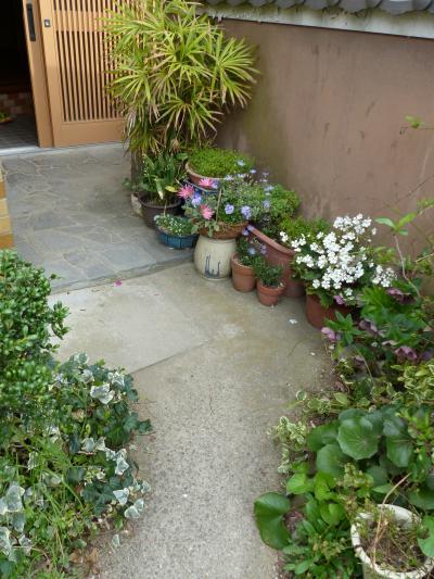 実家の庭6