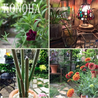 KONOHA_2015062506135561a.jpg