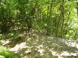 大矢田神社からの登山道と合流