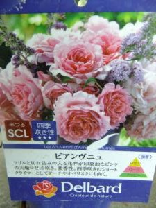 DSCF4472_convert_20150602172127.jpg