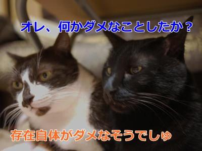023_convert_20150111171037.jpg