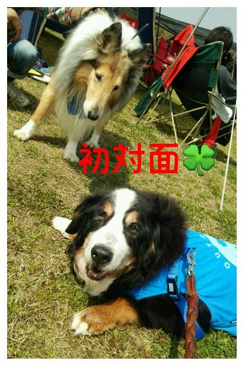 20150322こじれお2