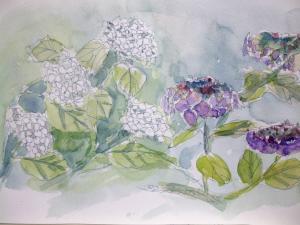 西宮 紫陽花
