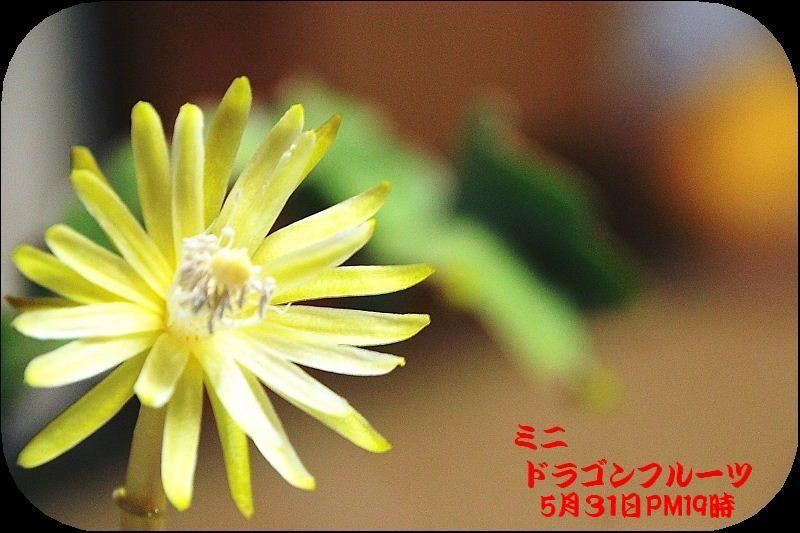 IMG_0004_201506011350436a1.jpg