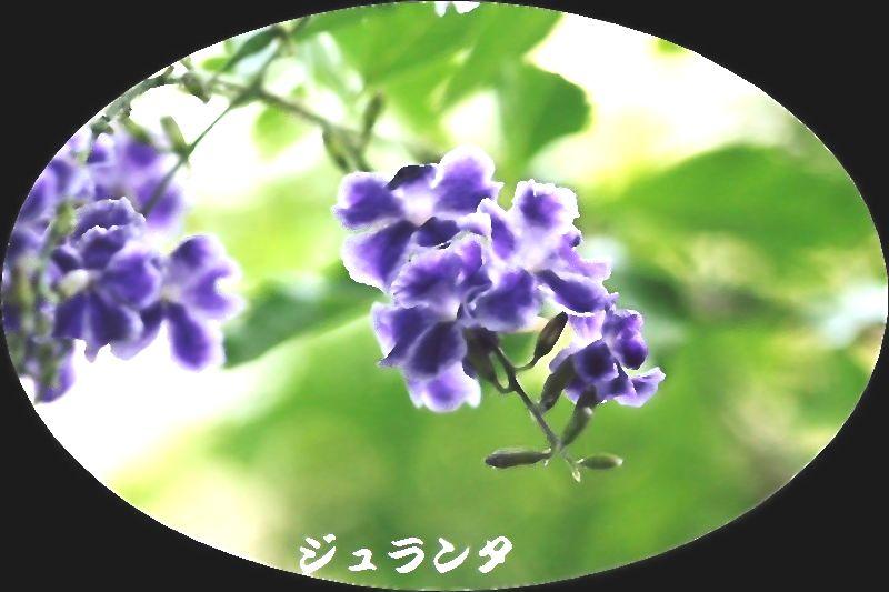 IMG_0026_20150629153945cff.jpg