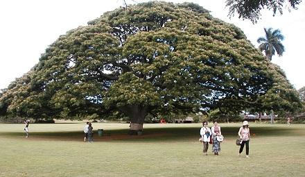 日立のこのきなんの木の木