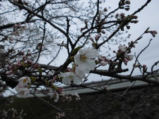 asakura0404-2.jpg