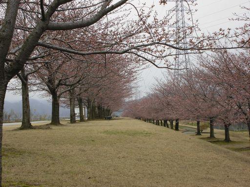 asakura0404-3.jpg
