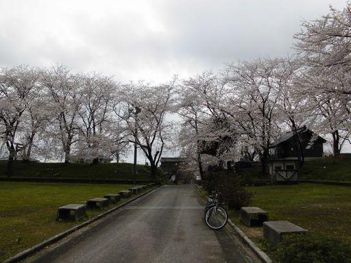 asakura0411-11.jpg