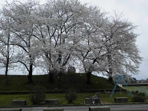 asakura0411-12.jpg