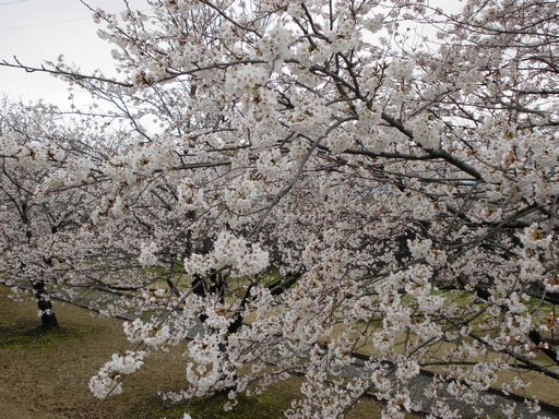 asakura0411-3.jpg