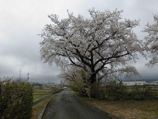 asakura0411-4.jpg