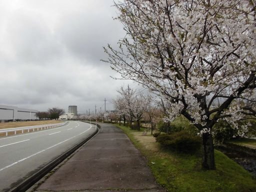 asakura0411-8.jpg