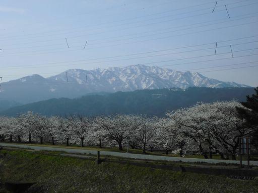 asakura0412-1.jpg