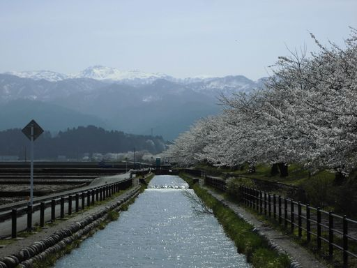 asakura0412-13.jpg
