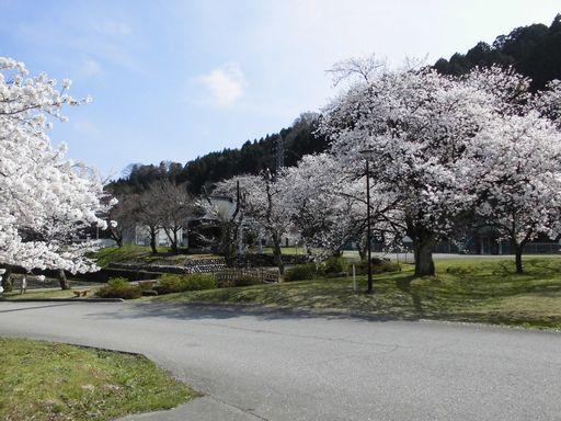 asakura0412-9.jpg