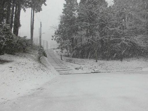 ayuki0310-1.jpg