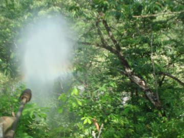 栗の木の消毒