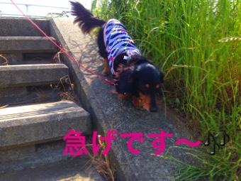 fc2blog_20150517213559908.jpg