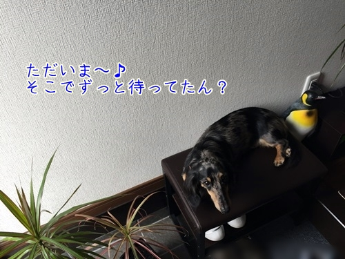 IMG_9637.jpg
