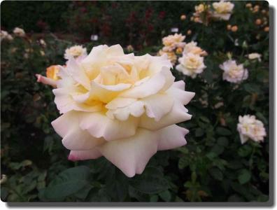 mini_3114_peace_P6271365.jpg
