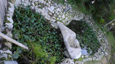 羽山神社のメダカ池