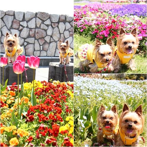 花とクルココ