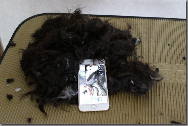 150510ロッティの散髪 093