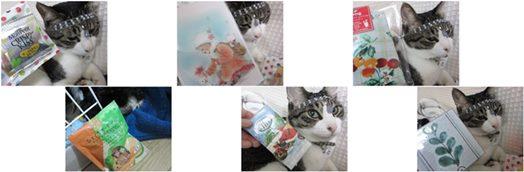 cats愛