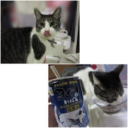 catsたまでん