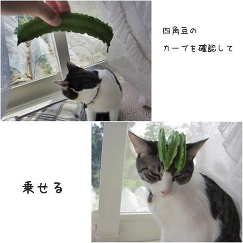 catsまめ