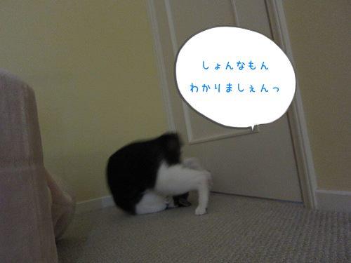 IMG_1940 jpghime jpg (8)