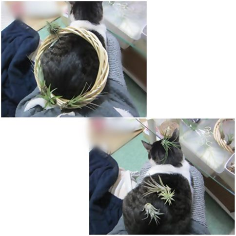 cats1_20141221021033df2.jpg
