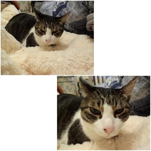 cats1_20150102234741d81.jpg