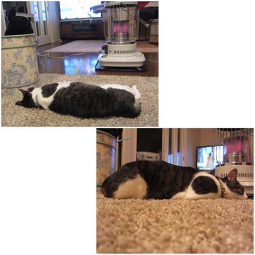 cats1_201502032217106c7.jpg